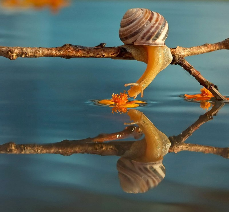 wondrous-beautiful-macro-photography-snails-pictures (6)