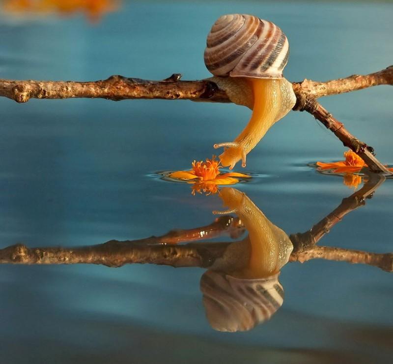 wondrous-beautiful-macro-photography-snails-pictures (6)