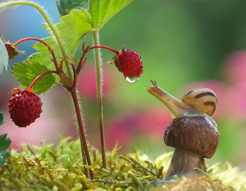 wondrous-beautiful-macro-photography-snails-pictures (7)