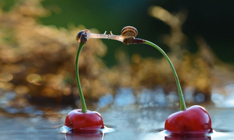 wondrous-beautiful-macro-photography-snails-pictures