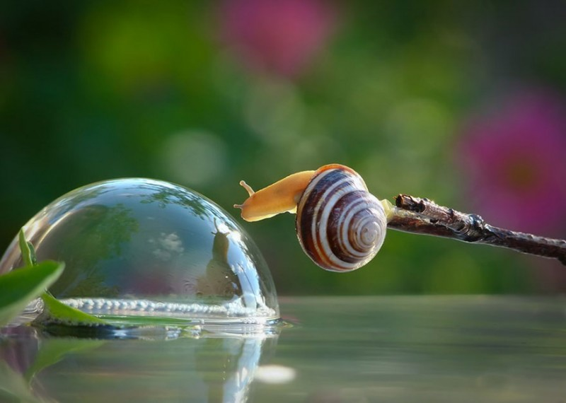 wondrous-beautiful-macro-photography-snails-pictures (9)