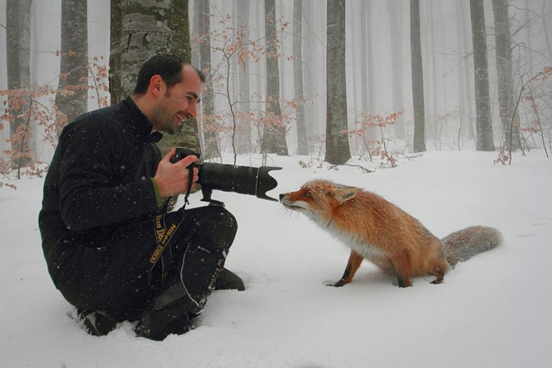 amazing-wildlife-photography-beautiful-foxes-pictures (19)