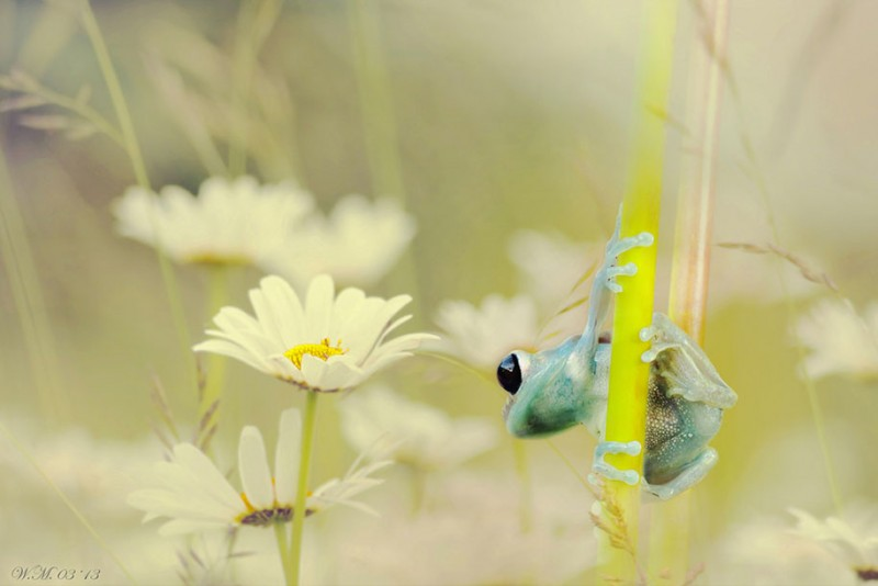 beautiful-magical-frogs-world-macro-photography-pictures (3)