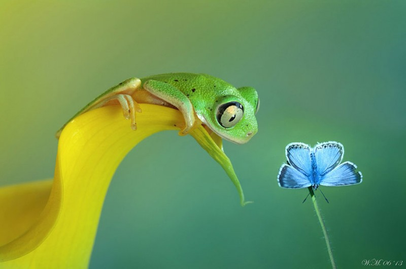 beautiful-magical-frogs-world-macro-photography-pictures (8)