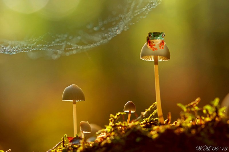 beautiful-magical-frogs-world-macro-photography-pictures (9)
