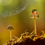 Small world around us – Beautiful miniature world of frogs in macro photography