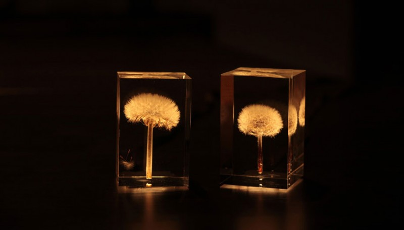creative-beautiful-elegant-dandelion-lamp-lights-design (1)
