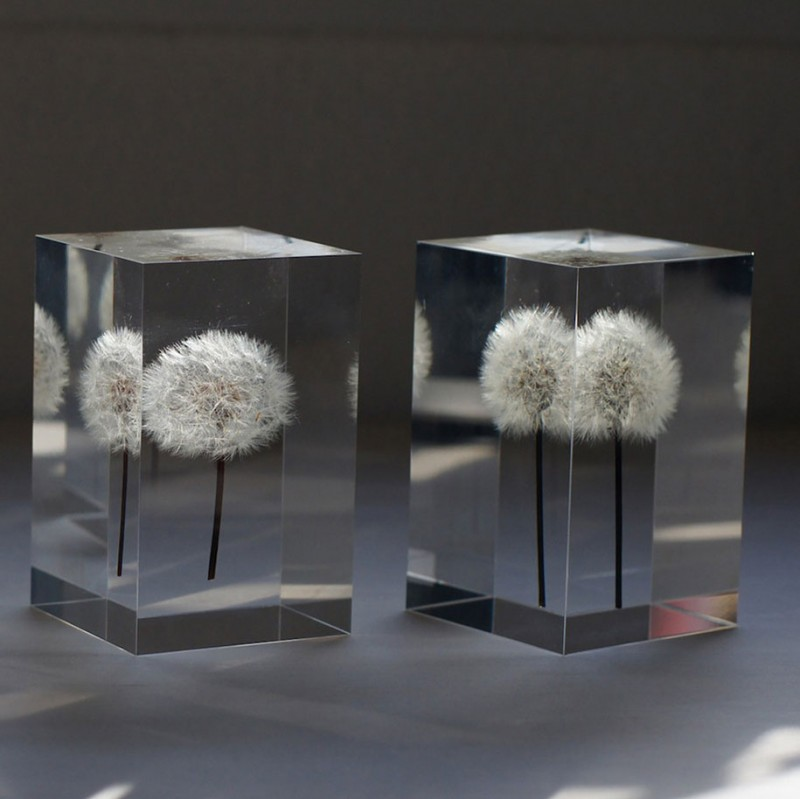 creative-beautiful-elegant-dandelion-lamp-lights-design (3)