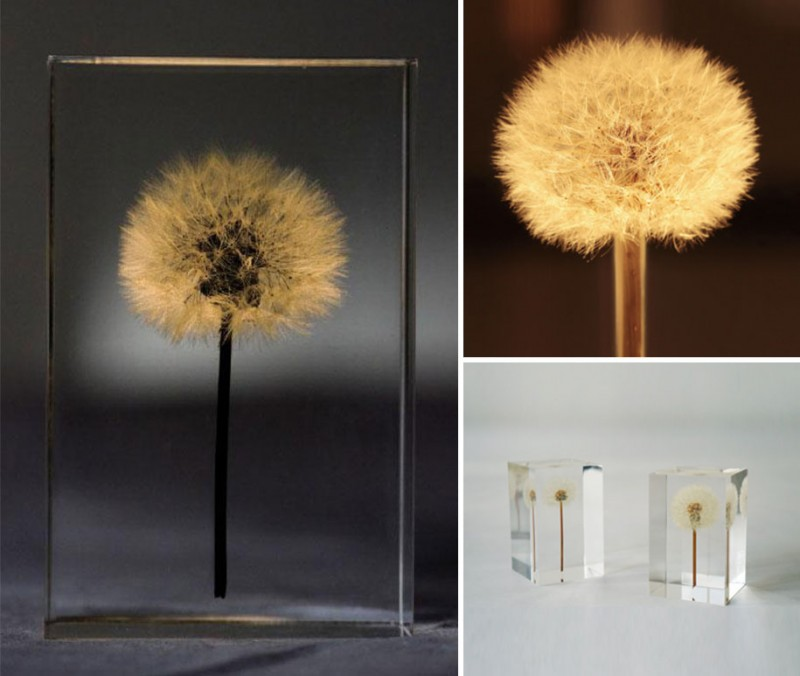 creative-beautiful-elegant-dandelion-lamp-lights-design (4)