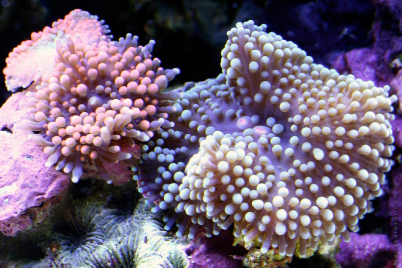 spectacular-macro-photography-beautiful-coral-up-close-pictures (11)