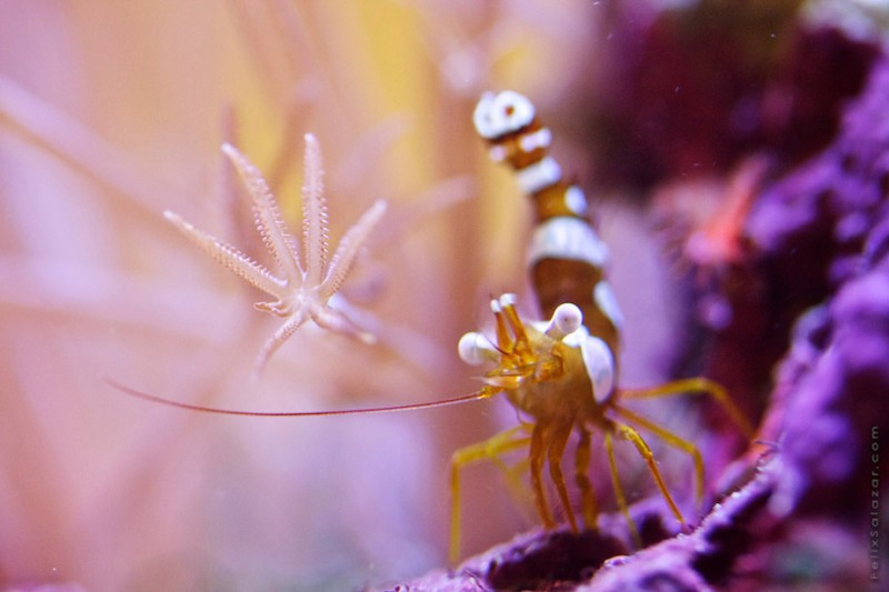 spectacular-macro-photography-beautiful-coral-up-close-pictures (14)