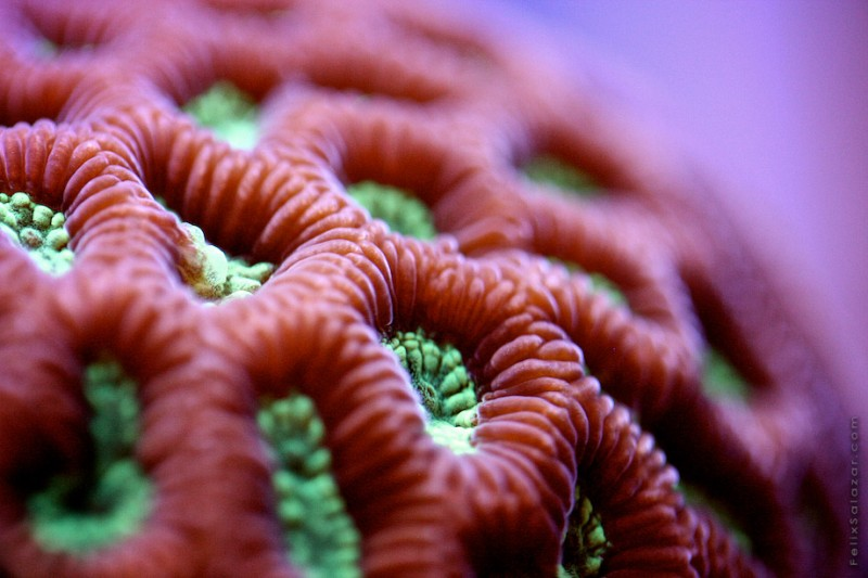 spectacular-macro-photography-beautiful-coral-up-close-pictures (3)