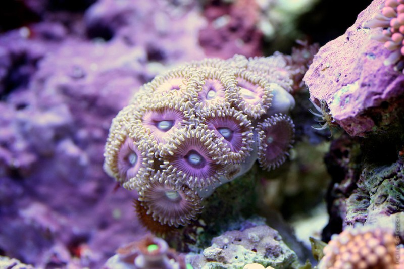 spectacular-macro-photography-beautiful-coral-up-close-pictures (9)