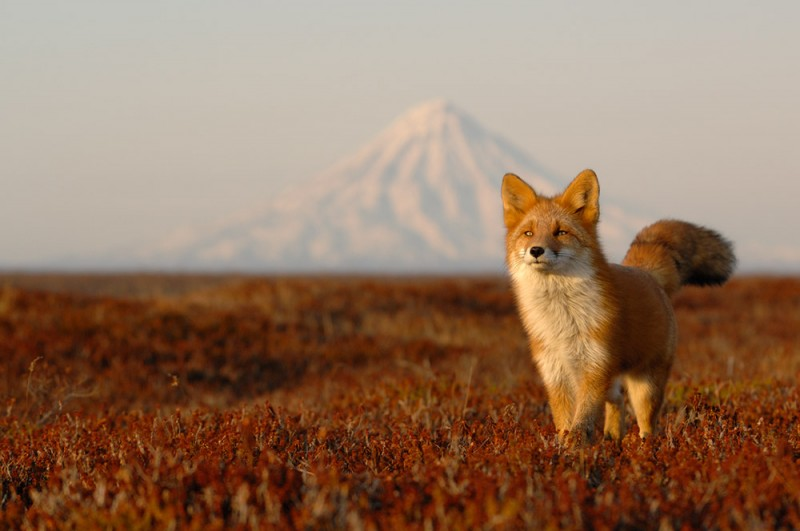 wonderful-beautiful-cute-foxes-photos