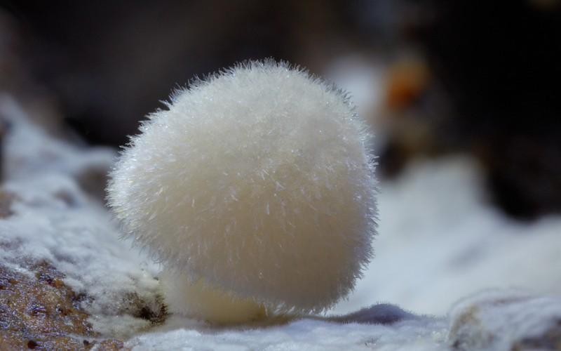 wonderful-stunning-beautiful-mushroom-fungi-pictures (11)