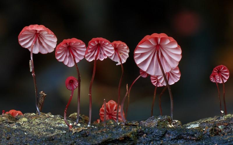 wonderful-stunning-beautiful-mushroom-fungi-pictures (12)