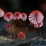 Stunning Beautiful Mushrooms and Fungi Photos By Photographer Steve Axford