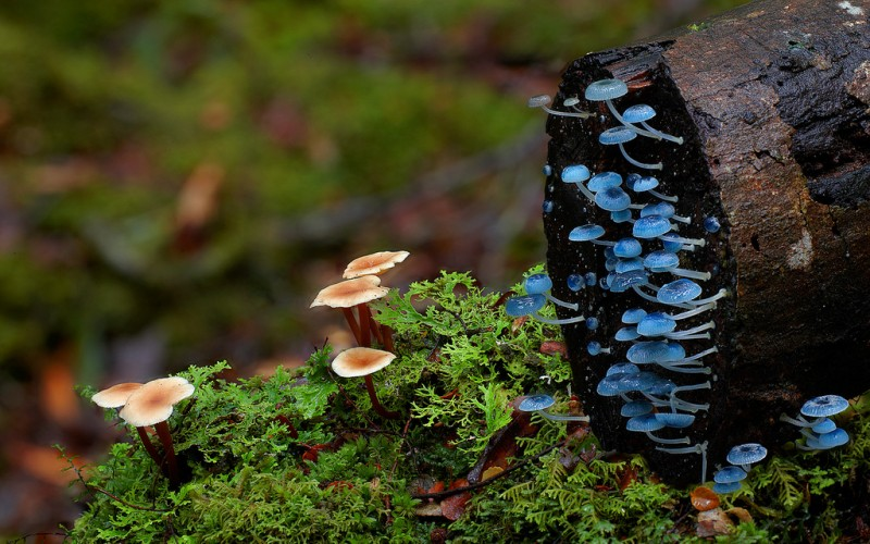 wonderful-stunning-beautiful-mushroom-fungi-pictures (14)