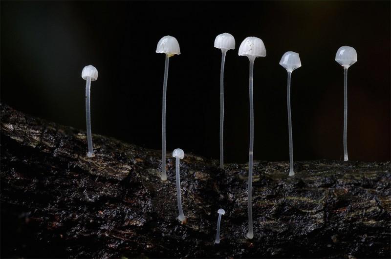 wonderful-stunning-beautiful-mushroom-fungi-pictures (18)