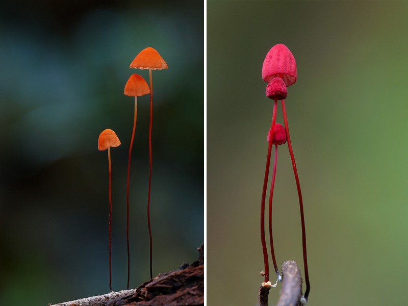 wonderful-stunning-beautiful-mushroom-fungi-pictures (21)