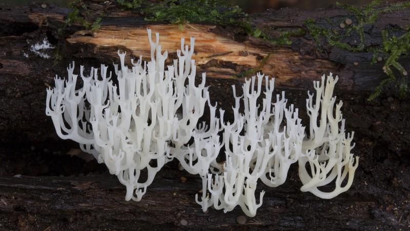 wonderful-stunning-beautiful-mushroom-fungi-pictures (6)