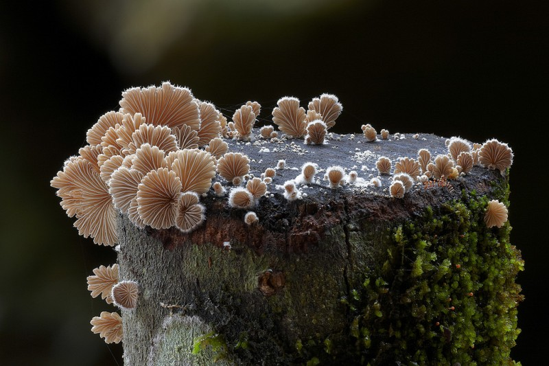 wonderful-stunning-beautiful-mushroom-fungi-pictures (8)