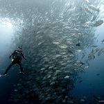 amazing-cool-wildlife-underwater-photography-shoal-fish-pictures (3)