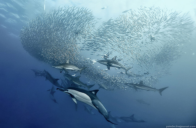 amazing-cool-wildlife-underwater-photography-shoal-fish-pictures (4)