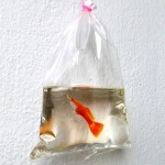 Hyper-realistic Aquatic Wildlife 3D Paintings Painted in Layers of Resin