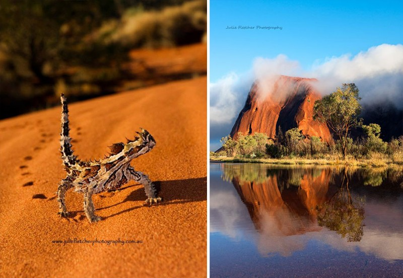 wildlife-photography-Australian-nature-landscape-photos (15)