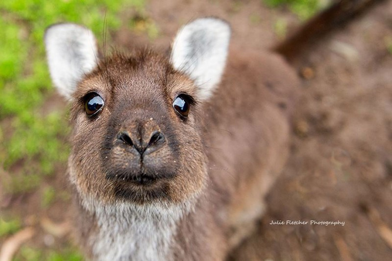 wildlife-photography-Australian-nature-landscape-photos (7)
