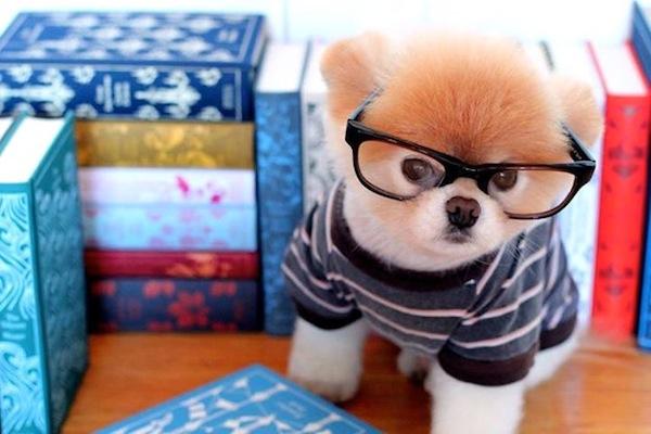 cute-adorable-animals-boo (1)