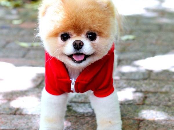 cute-adorable-animals-boo (2)