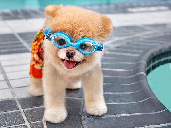 cute-adorable-animals-boo