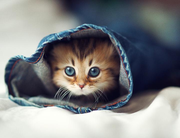 cute-adorable-animals-daisy (4)