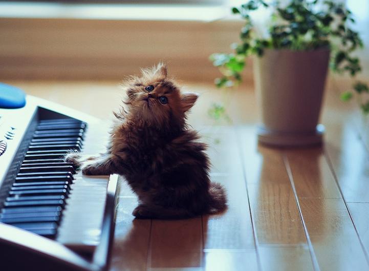 cute-adorable-animals-daisy