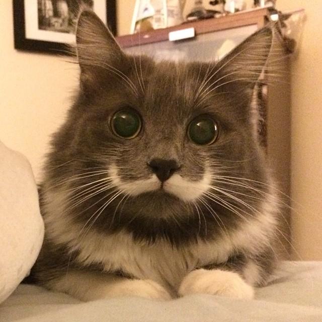 cute-adorable-animals-hamilton (1)