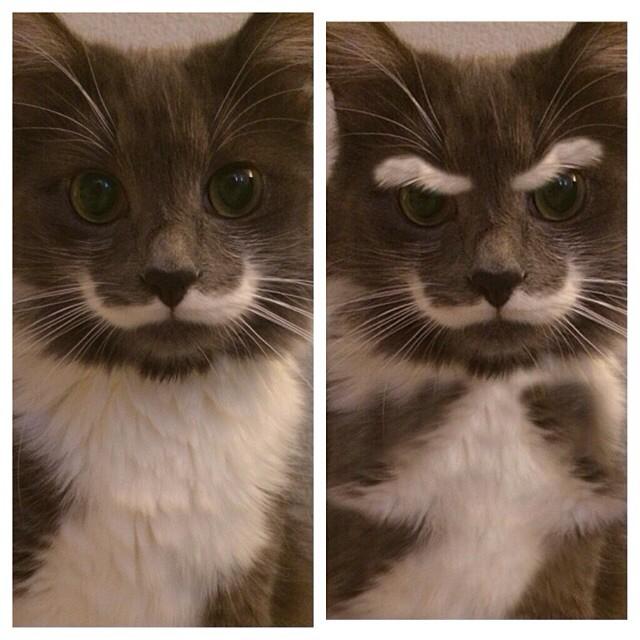 cute-adorable-animals-hamilton
