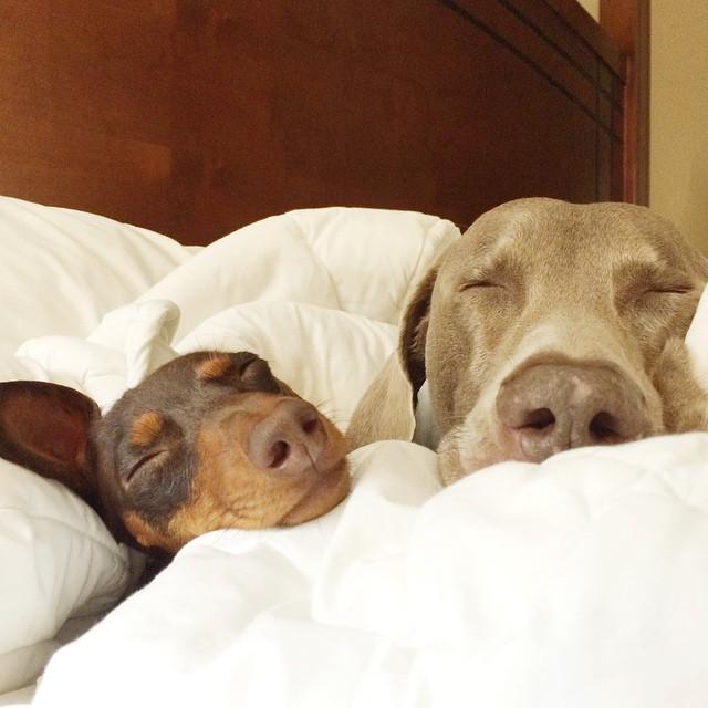 cute-adorable-animals-harlow-dog (1)