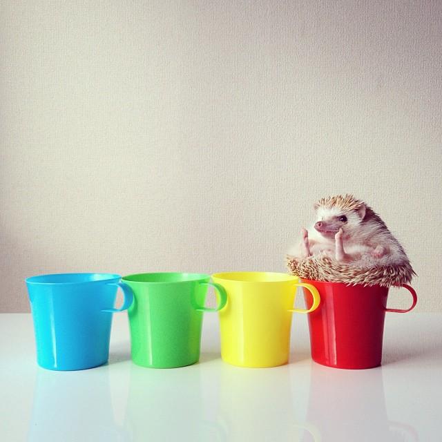 cute-adorable-animals-hedgehog-hedgepig