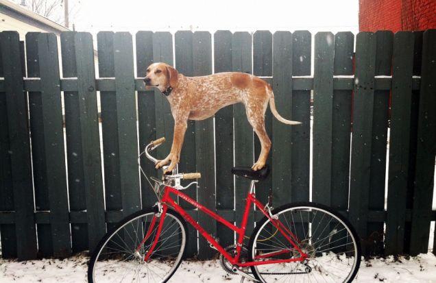 Collection of photos of dog stands on random objects, America  - 23 Feb 2012