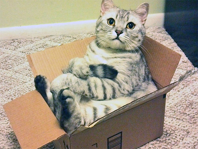 adorable-amusing-funny-pictures-of-sitting-cats (11)