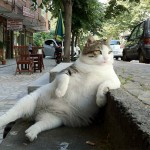 Funny pictures of awkwardly sitting cats