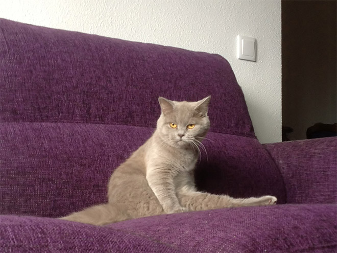 adorable-amusing-funny-pictures-of-sitting-cats (6)