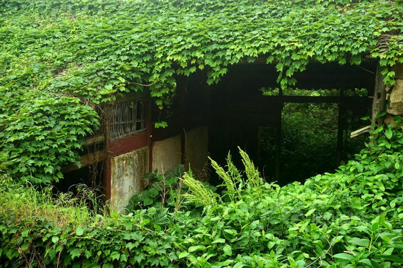 beautiful-dreamlike-abandoned-fishing-village-china-plants-crawling (3)