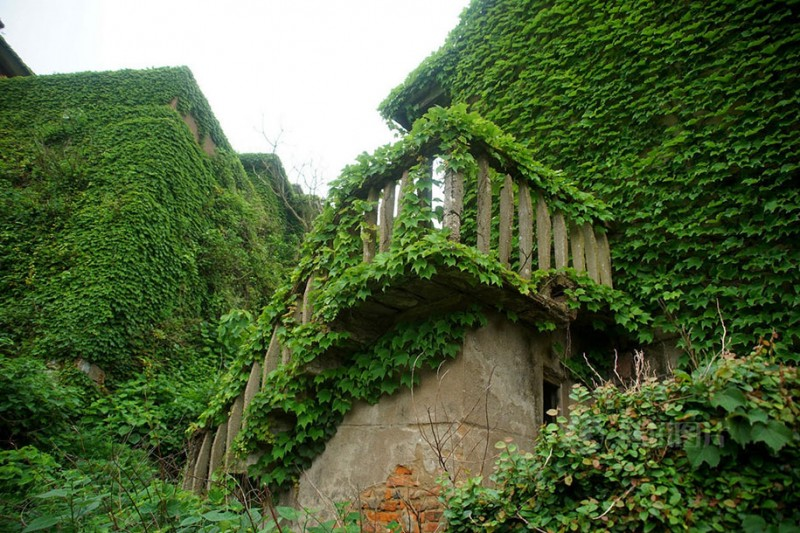 beautiful-dreamlike-abandoned-fishing-village-china-plants-crawling (4)