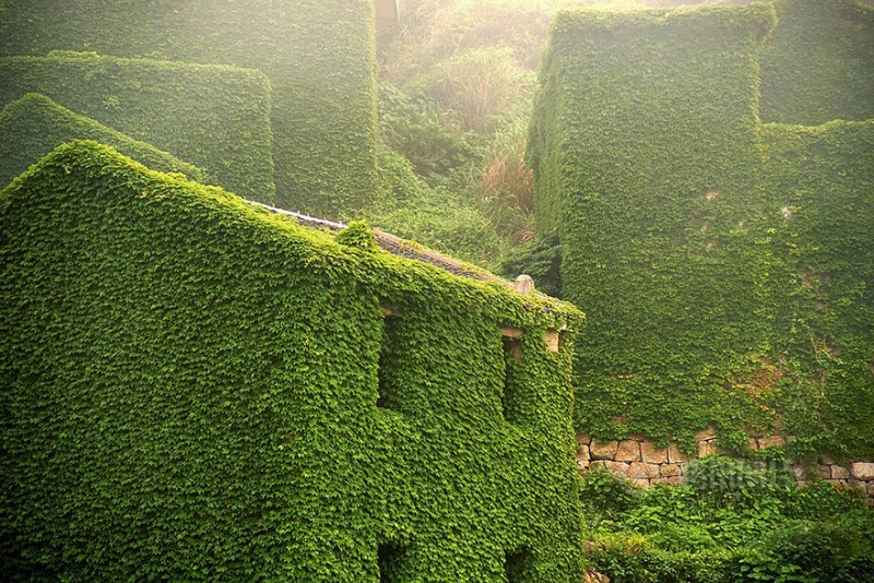 beautiful-dreamlike-abandoned-fishing-village-china-plants-crawling (7)