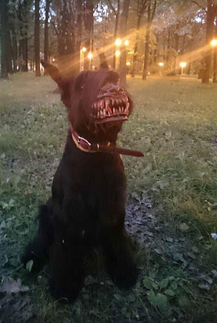 cool-dog-muzzle-accessory-werewolf (2)