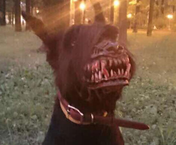 cool-dog-muzzle-accessory-werewolf (3)