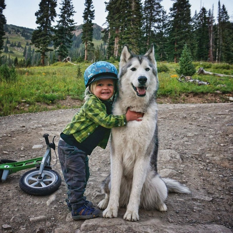 fun-Wolfdog-wild-life-adventures-nature-photography (11)